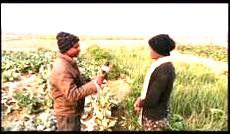 लकडाउनका कारण तरकारी उत्पादक किसान मारमा